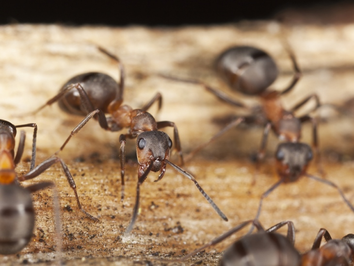 Top 5 Pests To Look Out For and How To Get Rid Of Them